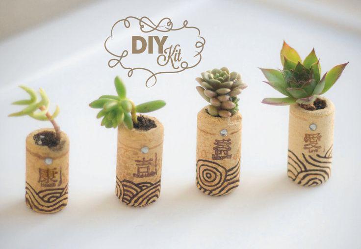 succulentes_bouchon_liege