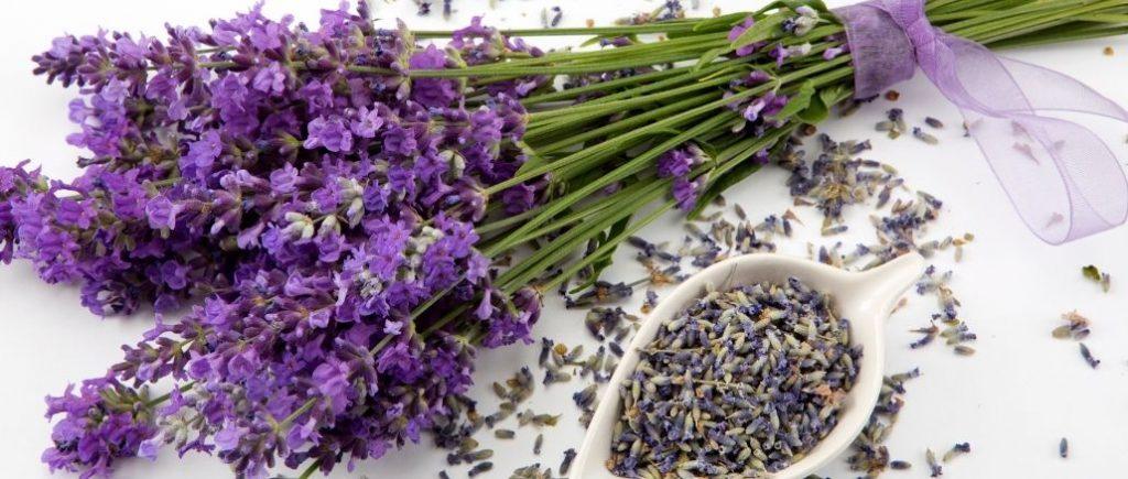 Bouquet De Lavande Violette