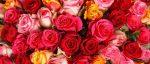 17 ans de mariage : tout savoir pour fêter vos noces de rose