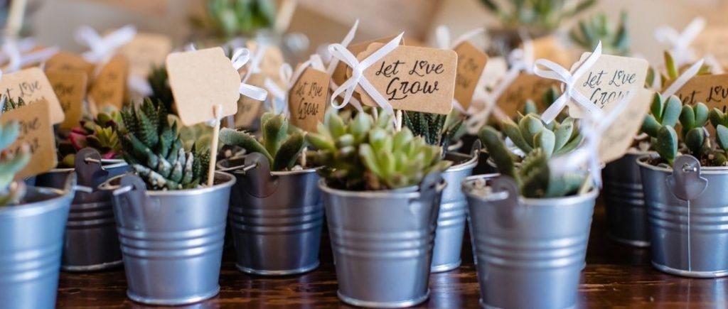 Plantes Pour La Décoration Du Mariage Avec Petite Pancarte